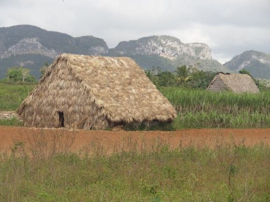Cuba- Vinales: Première region productrice de tabac. La maison en photo est le lieu ou le tabac est seché pendant de très longue semaine.